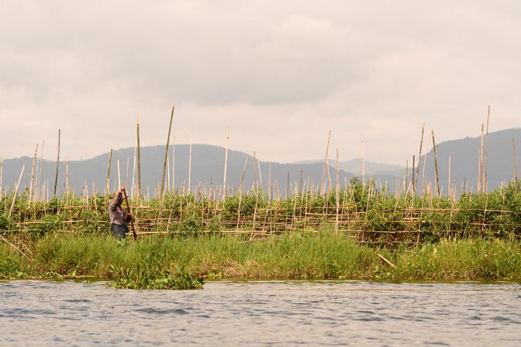 birmanie, voyage, photo, lac inle, lac, tomate