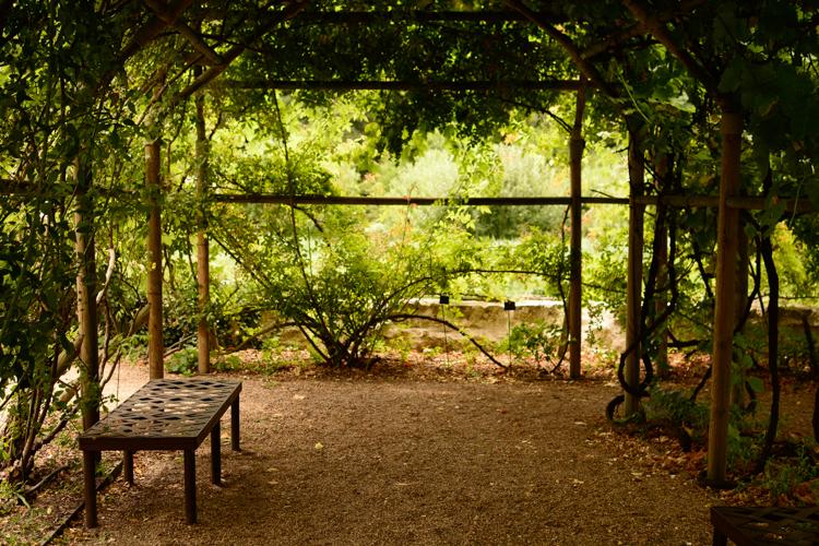 photographie, photo, indre et loire, jardin