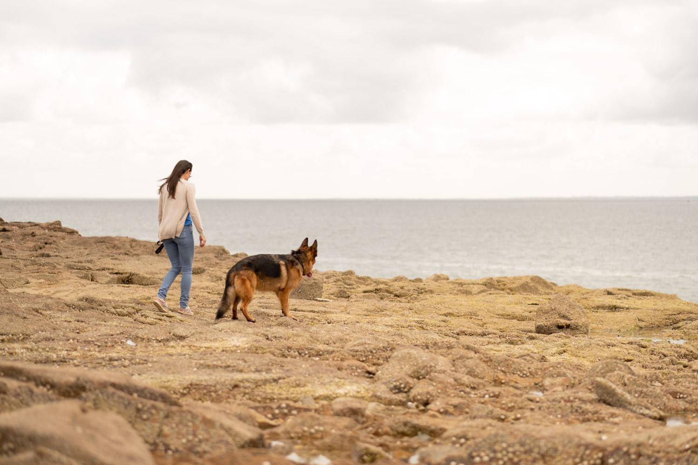 portrait de chien, photo de chien, berger allemand, chien, séance photo chien, séance photo berger allemand
